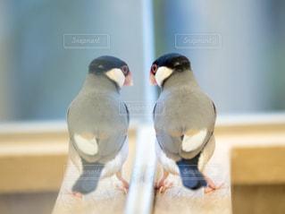 鳥の写真・画像素材[234152]