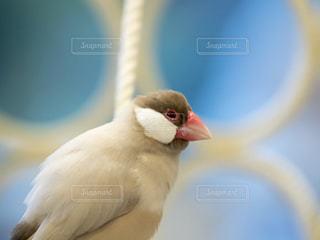 鳥の写真・画像素材[234842]