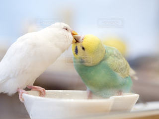 鳥の写真・画像素材[234847]
