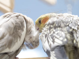 鳥の写真・画像素材[234848]
