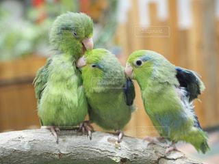 鳥の写真・画像素材[317949]