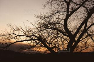 夕焼けの木の写真・画像素材[1159071]
