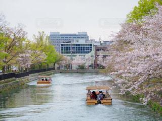 桜の岡崎公園の写真・画像素材[2030385]