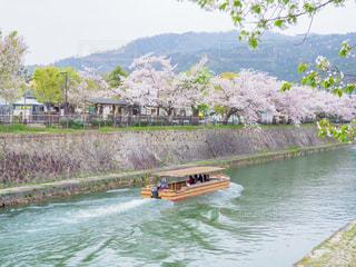 桜の岡崎公園の写真・画像素材[2030458]