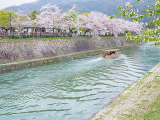 桜の岡崎公園の写真・画像素材[2030484]