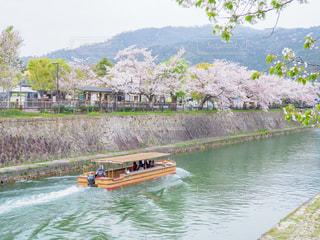 桜の岡崎公園の写真・画像素材[2030504]