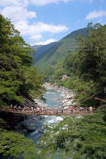 徳島県の蔓橋の写真・画像素材[2253678]