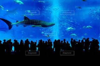 沖縄美ら海水族館を背景に群衆の前で舞台に立つ人々のグループの写真・画像素材[2356541]