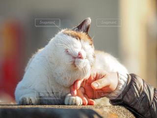 猫をなでるの写真・画像素材[2810595]