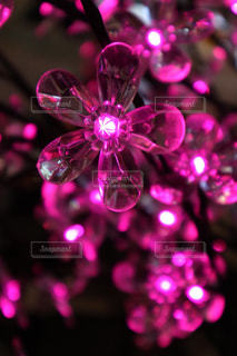 イミテーションの桜の写真・画像素材[1049681]