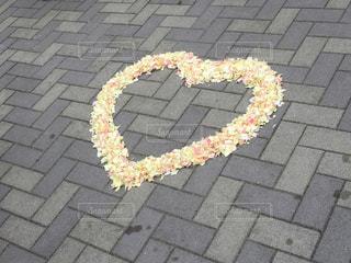 ハートの花の写真・画像素材[1051330]
