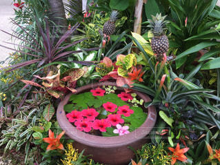 南国のお花の写真・画像素材[1052542]