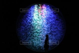 クラゲの水槽の写真・画像素材[3552474]