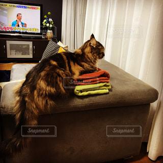 洗濯物に座る猫 - No.1049459