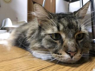 近くのテーブルに横になっている猫のアップの写真・画像素材[1049600]