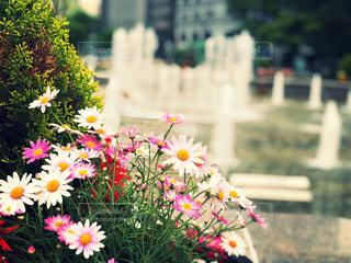ピンクの花たちの写真・画像素材[1208979]