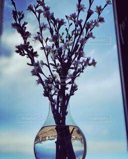 春の気配の写真・画像素材[4593621]