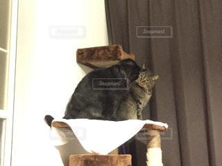 猫 見つめ合うの写真・画像素材[1049999]