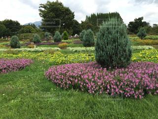 素敵な庭園の写真・画像素材[1082157]