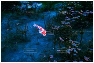 モネの池 岐阜の写真・画像素材[1055527]