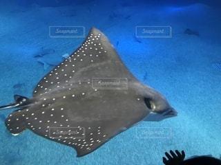 水面下を泳ぐ魚たちの写真・画像素材[1053046]