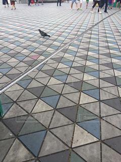 鳩とタイル張りの写真・画像素材[1050602]