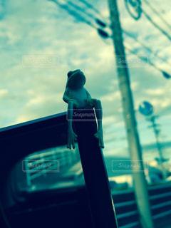 空を見るカエルの写真・画像素材[1060687]