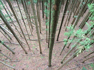 整備された林の写真・画像素材[1050374]