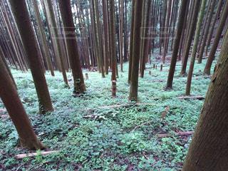整備された林の写真・画像素材[1050380]