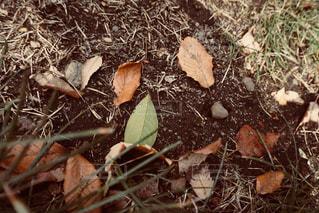 土の上の落ち葉の写真・画像素材[1050904]