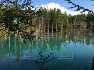 青い池 北海道の写真・画像素材[1050690]