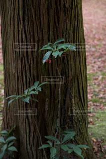 近くの木のアップの写真・画像素材[1050724]