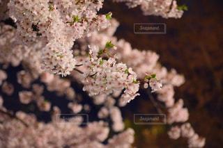 近くの花のアップの写真・画像素材[1139669]