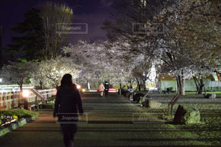 桜の写真・画像素材[1139671]
