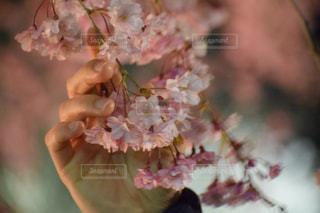 近くの花のアップの写真・画像素材[1139673]