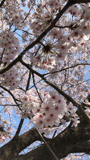 木の枝に花の花瓶の写真・画像素材[1098234]