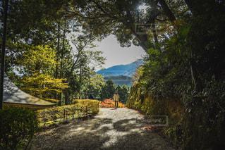 森から抜けた道の写真・画像素材[1059629]