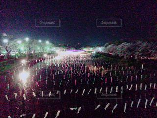 夜桜と鯉のぼりの写真・画像素材[1051191]