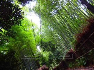 嵐山の写真・画像素材[1051196]