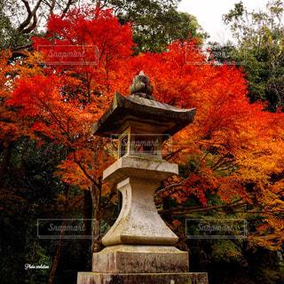 秋の灯篭の写真・画像素材[1051461]