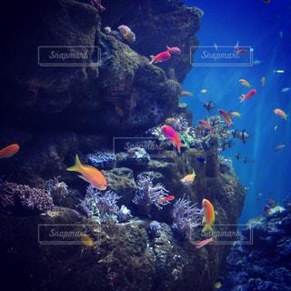 水槽世界の写真・画像素材[1051559]