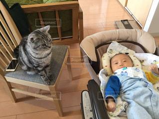 椅子に座る猫と子どもの写真・画像素材[1051629]