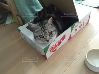 ダンボールの中の猫の写真・画像素材[1051707]