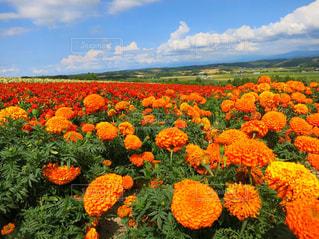 鮮やかな花の写真・画像素材[1130537]
