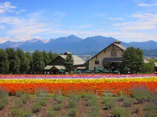 富良野の花畑 - No.1130539
