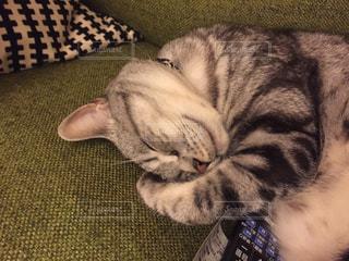 ソファで寝る猫の写真・画像素材[1051748]