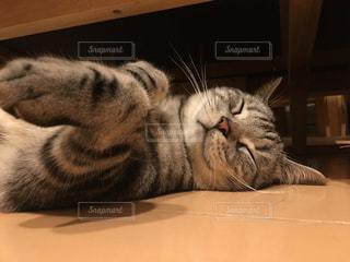 くつろぐ猫の写真・画像素材[1051763]