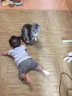 赤ちゃんと猫の写真・画像素材[1051805]