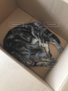 箱で眠っている猫の写真・画像素材[1051815]
