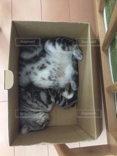 箱の中の猫の写真・画像素材[1051819]